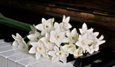 White flowers displayed on a piano keyboard.